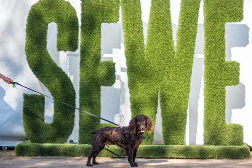 Southeastern Wildlife Exposition (SEWE)